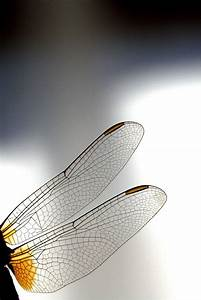66 Best Images About Dragonfly Embroidery On Pinterest