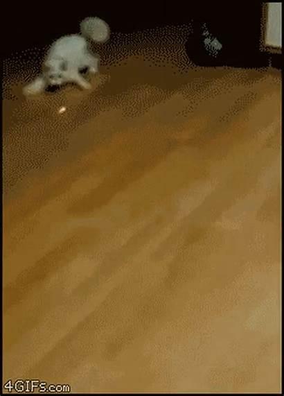 Animal Gifs Found