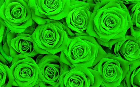 papel parede mural wallpaper green rose  wallpaper