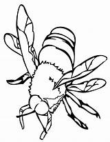 Bee Coloring Pages Printable sketch template