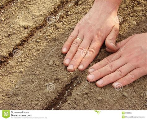 sowing seeds images sowing seeds royalty free stock photo image 9706855
