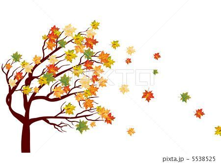 Found on Bing from pixta jp Fall leaves drawing Tree