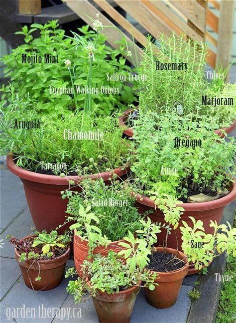 grow your own perennial herb container garden see best