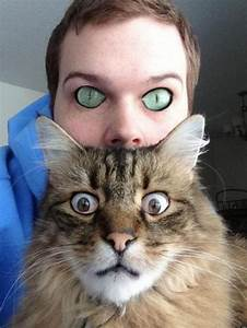 Cat And Human Eye Swap Will Give You Nightmares (PHOTO ...
