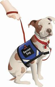 Best Guide Dog Illustrations  Royalty