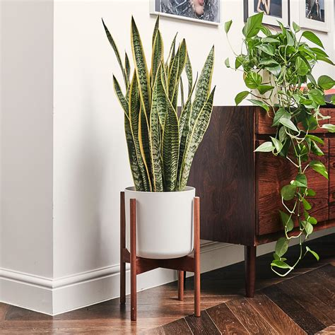 Meet The Unkillable Houseplant That Can Survive Anywhere