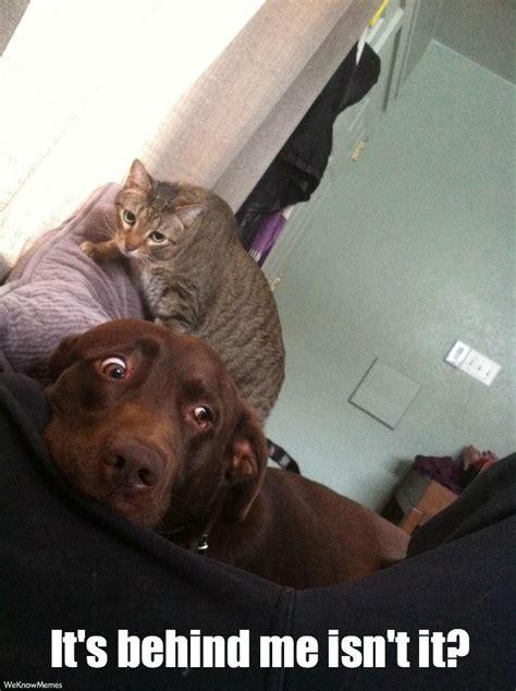 Its Behind Me Isnt It Cat Meme Cat Planet Cat Planet