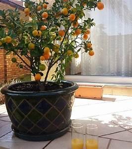 Planter Noyau Mangue : best 10 planter noyau avocat ideas on pinterest noyau ~ Melissatoandfro.com Idées de Décoration