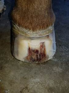 Rustebakke Veterinary Service
