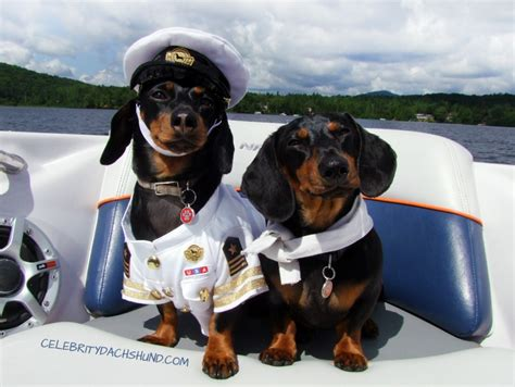 Dog Boat Captain Hat by Dachshunds On A Boat Captain Crusoe First Mate Oakley