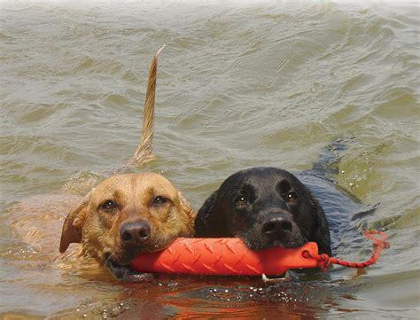 training dummybumper  dogs   sizes large xl