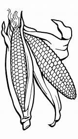 Corn Coloring Clipart Fruit sketch template