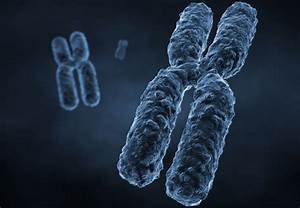 10 Facts About Chromosomes