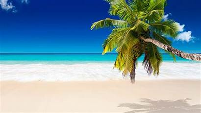 Beach Palm Coconut Tree Trees Sand Tropical