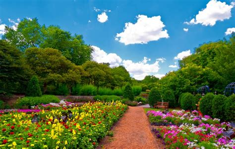 amazing nature wallpapers flowers widescreen images