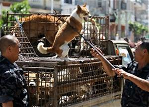 Authorities Slaughter Yunnan Dogs Dog Bites