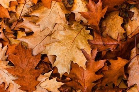 les feuilles mortes  tresor sous nos pieds jardiner