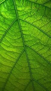 Green, Leaf, Wallpaper