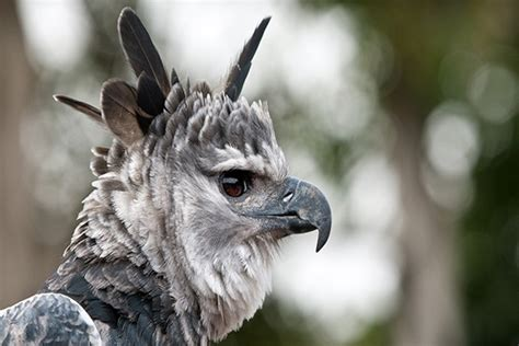 15 Countries and their Weird National Animals Tail and Fur