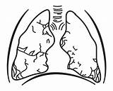Lungs Respiratory System Drawing Human Coloring Clipart Without Transparent Anatomy Clipartmag Brain Webstockreview sketch template