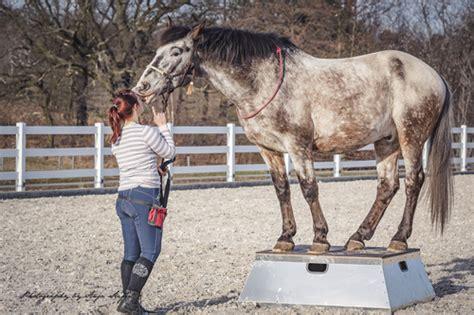 gruende warum dein pferd das podest lieben wird pferde
