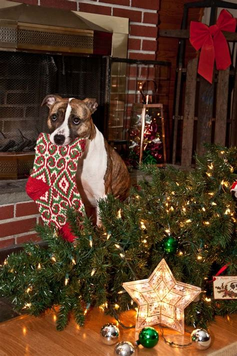 let s talk christmas dangers for dogs top dog tips