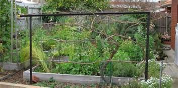Types Of Bench Vice by Wooden Diy Grape Trellis Plans Pdf Plans