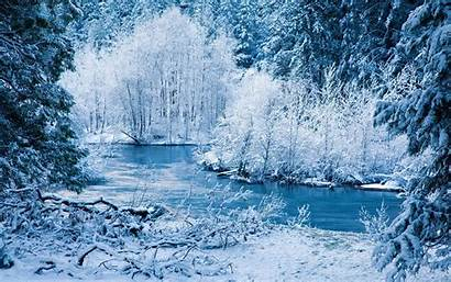 Winter Forest Evening Wallpapers Nature Desktop Background