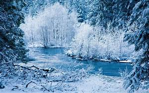 Evening winter forest wallpapers and images