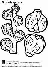 Choux Bruxelles Rosenkohl Cavolini Bruselas Coles Malvorlage Sprout Spruiten Ausdrucken Ausmalbilder Pomodori Tomatenplant sketch template