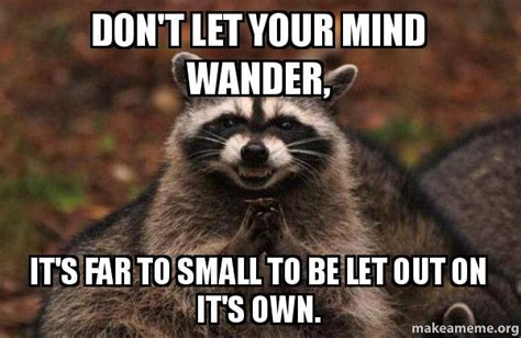 Don T Let Your Memes Be Memes - don t let your mind wander it s far to small to be let out on it s own evil plotting raccoon