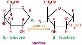 Oligosaccharides | Chemistry@TutorVista.com