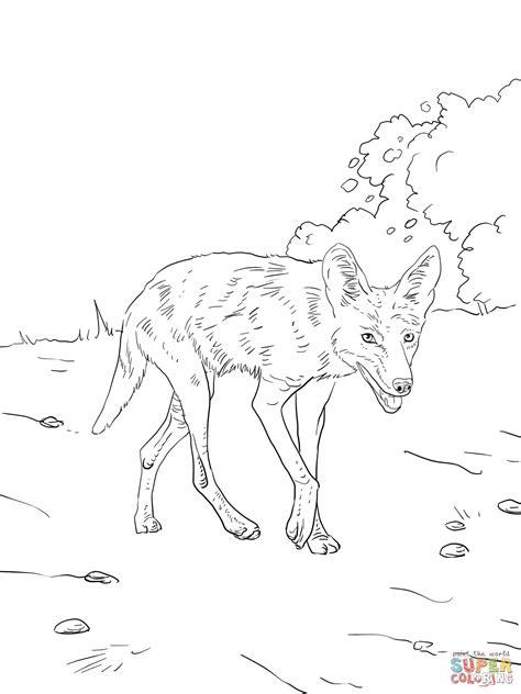 Ausmalbild Kojote Streift Durch Den Wald Ausmalbilder