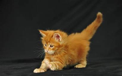 Cat Funny Wallpapers Kitten Cats Linkedin Kittens