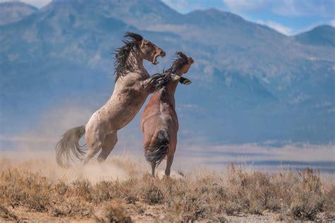 wild horses wilder controversy