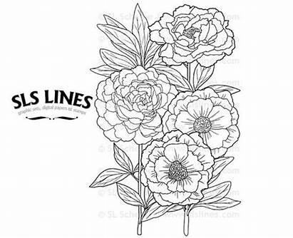 Coloring Adult Florals Books Garden Flowers Slslines