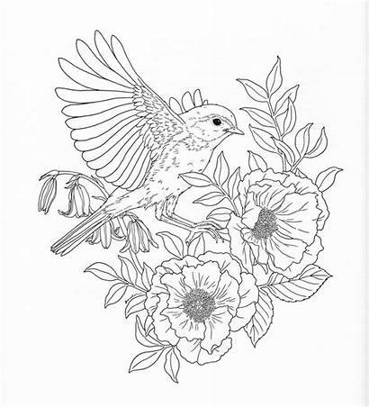 Coloring Nature Pages Adult Flower Printable Templates