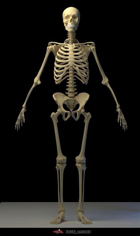 artstation human skeleton tai ji human skeleton