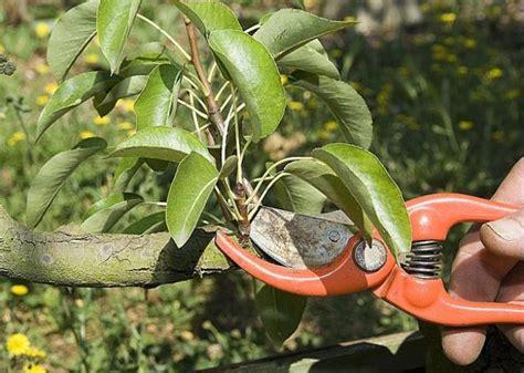 conseils et astuces pour avoir un magnifique jardin entretien des arbres fruitiers de jardin