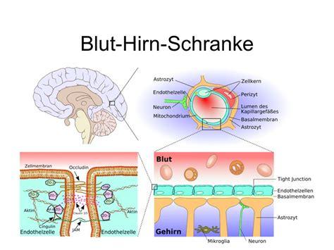 Neurophysiologische Grundlagen
