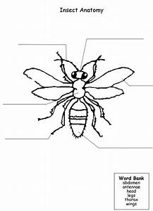 12 Best Images Of Parts Of An Insect Worksheet