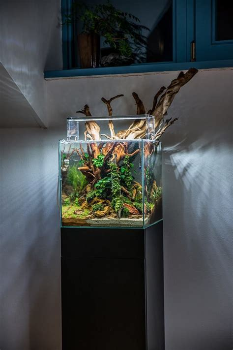Aquascape Wood - an aquascape by voladuson big wood in small tank pass