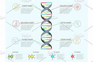 Dna Infographic  Genetic Spiral By Tartila On