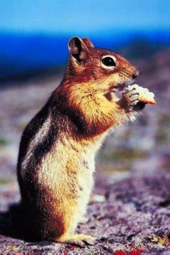 small exotic pet    squirrel animals momme