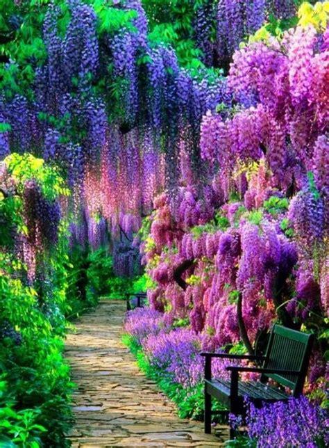 wisteria  rainbow waterfall  bright colors