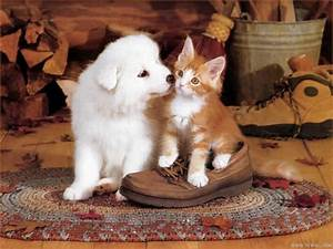 These 12 Cute Dog and Cat Pictures Will Make Your Heart ...