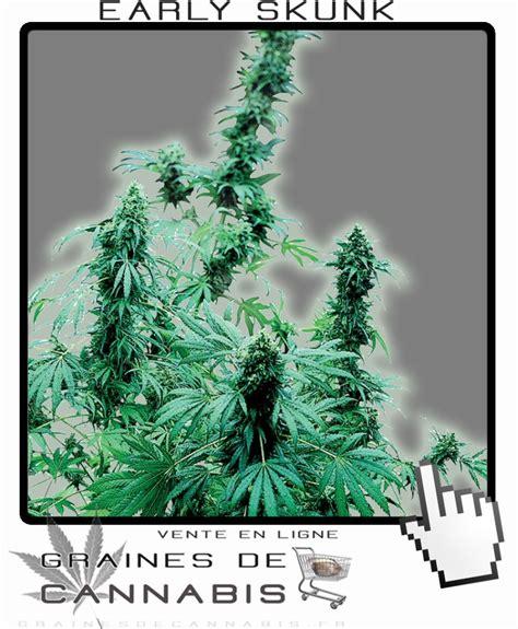 culture cannabis interieur debutant culture interieur debutant 28 images jdc 1er jdc indoor flo 64 hps 250 watt 2eme cut
