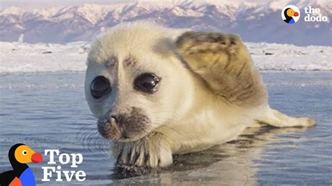 Seal Pup Waves To Photographer + Other Amazing Animal E