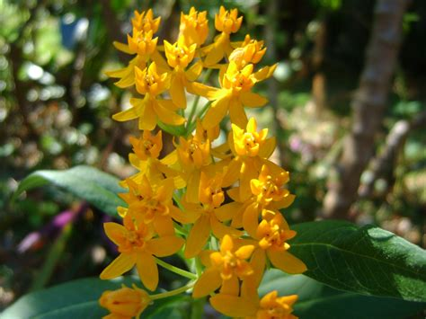 plants for butterfly garden 5 butterfly garden flower plants