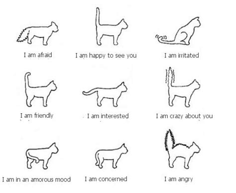 Standing Instruction Meaning by Tootle Doodles Understanding Cat Body Language Cat